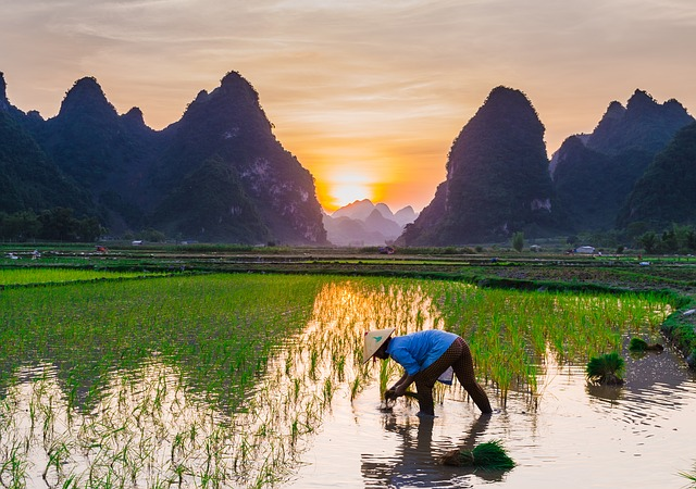 Tout savoir sur le riz et devenir incollable
