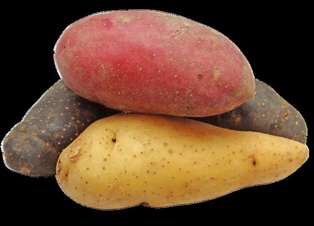 Les pommes de terre dans toute leur diversité