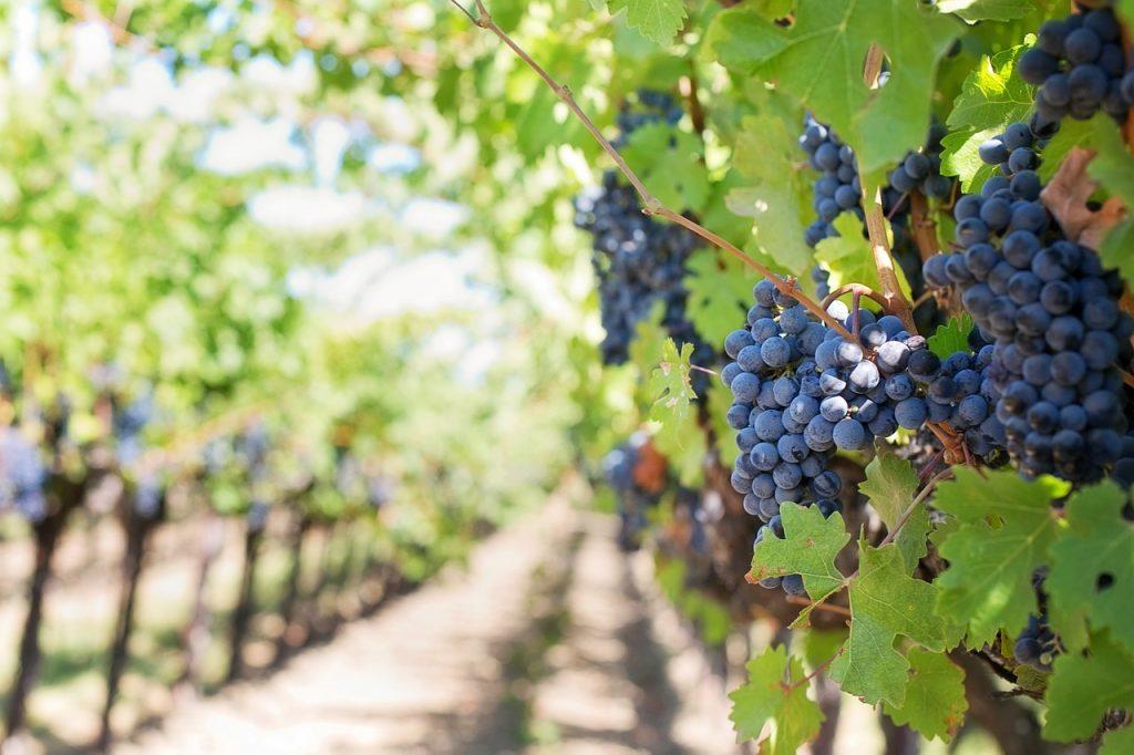 Métiers du vin : un secteur qui embauche.